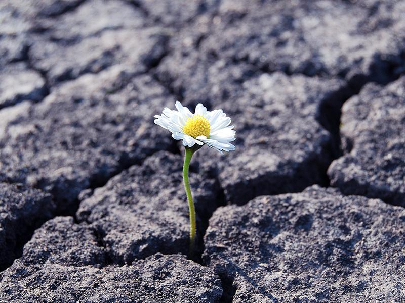 Flower has grown in arid cracked barren soil