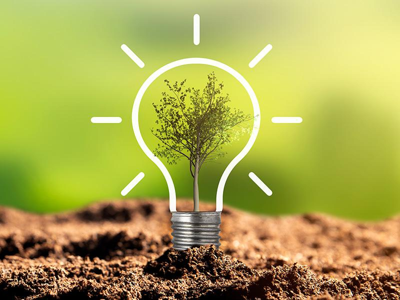 White outline of a shining lightbulb, planted in dirt with a tree inside on a verdant background