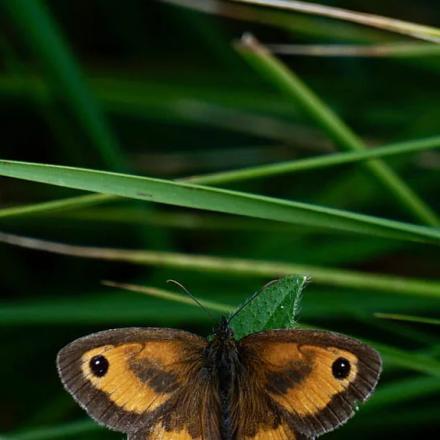 A Butterfly on Green Grass