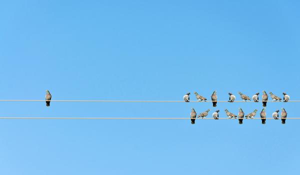 Birds on telephone lines
